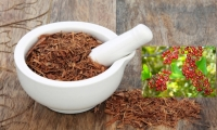 Catuaba and sarsaparilla tea