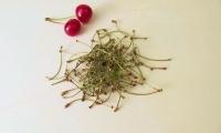 Chá de pés de cereja
